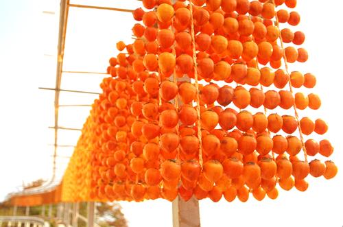 四郷の串柿作り: 四郷の串柿作り